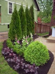 39-Evergreens You Can Use For Landscaping