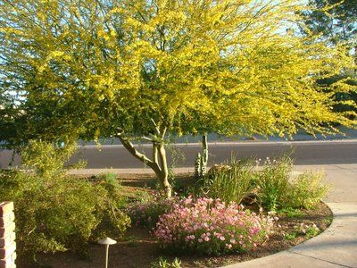 39-Finding Drought Resistant Trees