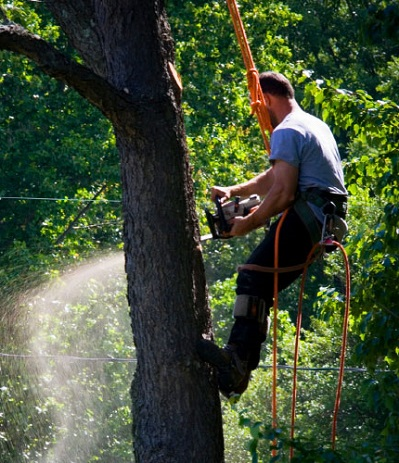 39-Importance of Tree Trimming services on Saving Trees